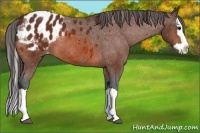 Horse Color:Bay Splash Appaloosa