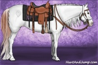 Horse Color:Bay Dun Sabino Splash Appaloosa