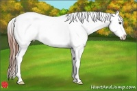 Horse Color:White Spotted Bay Appaloosa