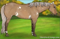 Horse Color:White Spotted Silver Bay Dun Frame