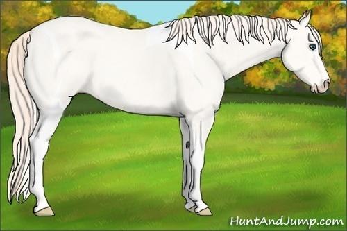 Horse Color:Perlino Tobiano