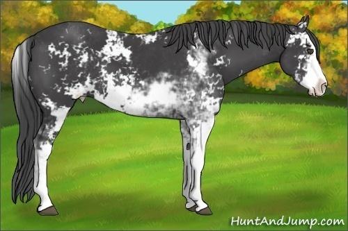 Horse Color:Smokey Black Sabino