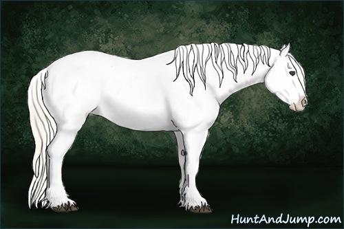 Horse Color:Palomino Roan Appaloosa
