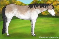 Horse Color:White Spotted Bay Roan Dun