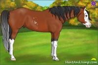 Horse Color:Bay Sabino Splash