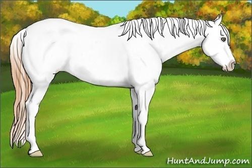 Horse Color:White Spotted Classic Cream Champagne Dun Sabino Appaloosa