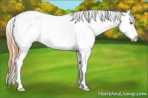 Horse Color:White Spotted Classic Cream Champagne Dun Sabino Appaloosa