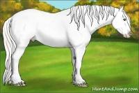 Horse Color:Silver Sable Champagne Dun Sabino Splash Frame Appaloosa Rabicano