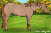 Horse Color:Red Roan