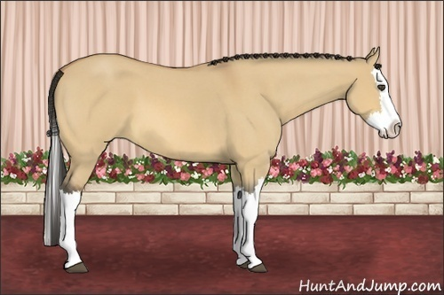 Horse Color:Buckskin Roan Dun Splash