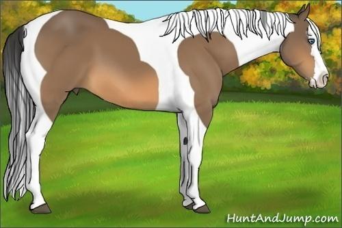 Horse Color:Buckskin Splash Tobiano