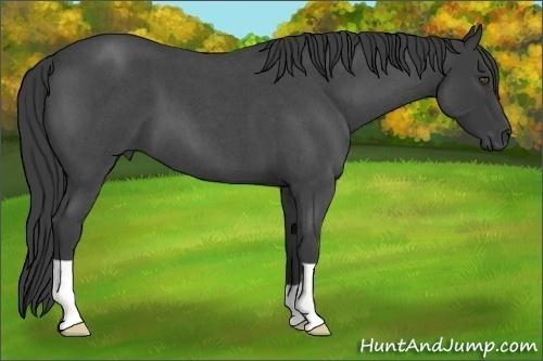 Horse Color:Smokey Blue Roan