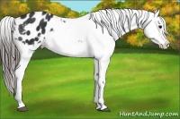 Horse Color:Black Appaloosa