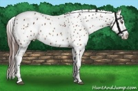 Horse Color:Brown Roan Appaloosa  Brindle