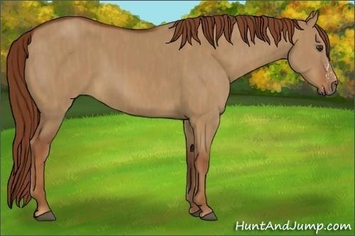 Horse Color:Red Dun Splash  Brindle