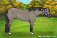 Horse Color:Smokey Grullo Roan