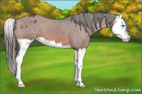 Horse Color:Bay Splash Appaloosa