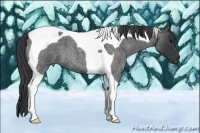 Horse Color:Blue Roan Tobiano