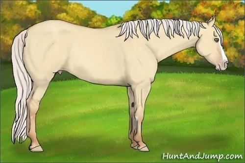 Horse Color:Silver Classic Champagne Dun Splash Frame