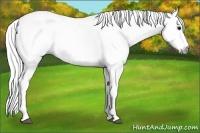 Horse Color:Gray Splash Tobiano
