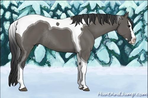 Horse Color:Grullo Splash Tobiano Rabicano