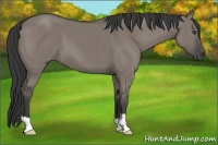 Horse Color:Grullo