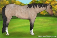 Horse Color:Bay Roan Dun