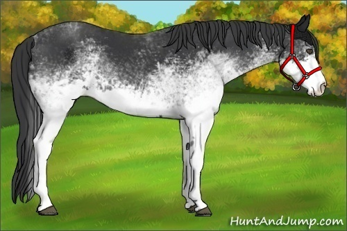 Horse Color:White Spotted Black