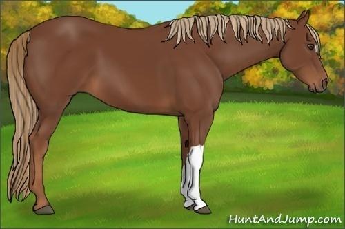 Horse Color:Chestnut