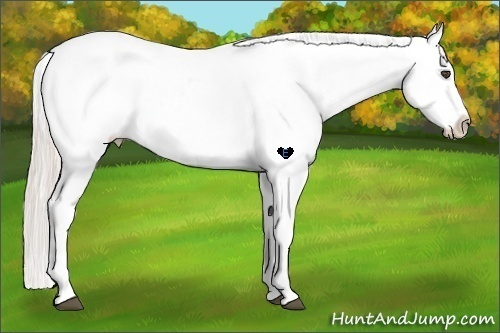 Horse Color:White Spotted Silver Bay Dun Appaloosa