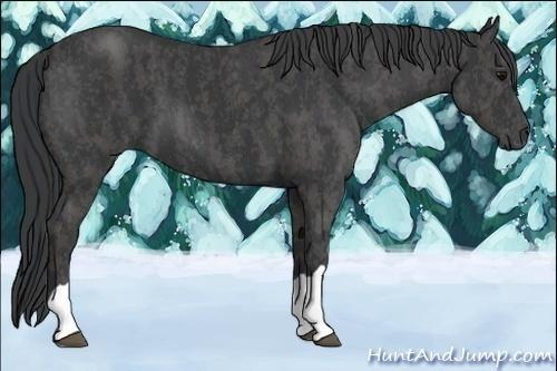 Horse Color:Blue Roan  Brindle
