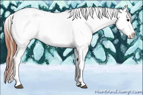 Horse Color:Bay Splash Tobiano Appaloosa  Brindle