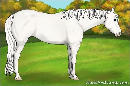 Horse Color:Cremello Dun