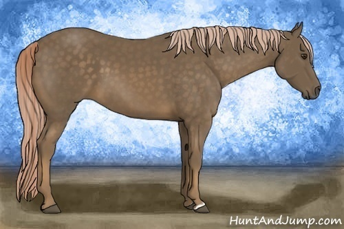 Horse Color:Chocolate Palomino
