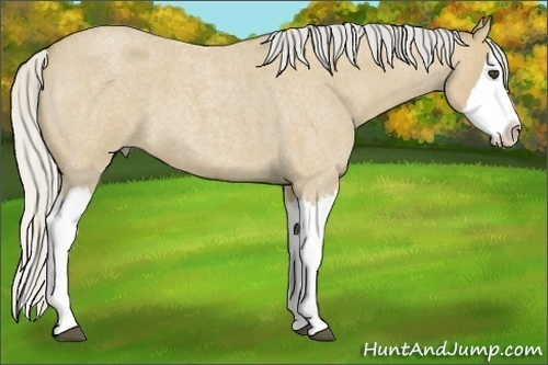 Horse Color:Silver Buckskin Roan Splash