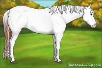 Horse Color:Brown Appaloosa  Brindle