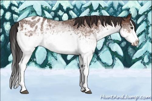 Horse Color:White Spotted Bay Splash Appaloosa Rabicano