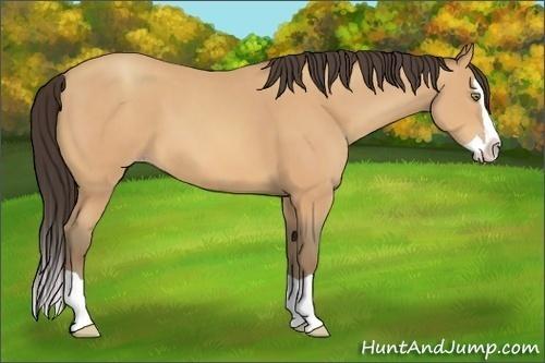Horse Color:Amber Champagne Splash