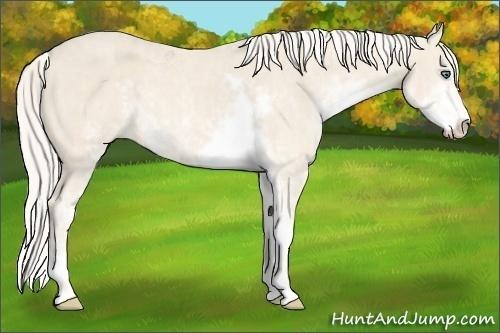 Horse Color:Cremello Sabino  Brindle