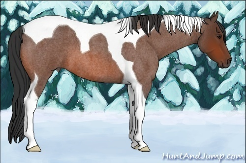 Horse Color:Bay Roan Tobiano