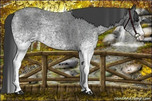 Horse Color:White Spotted Blue Roan Splash