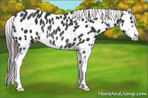 Horse Color:Black Splash Frame Appaloosa Rabicano