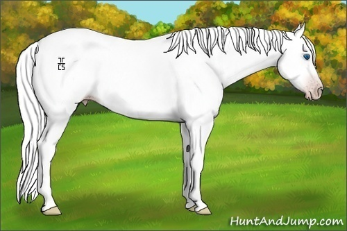 Horse Color:Gray Splash
