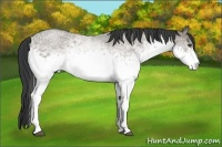 Horse Color:White Spotted Grullo Roan