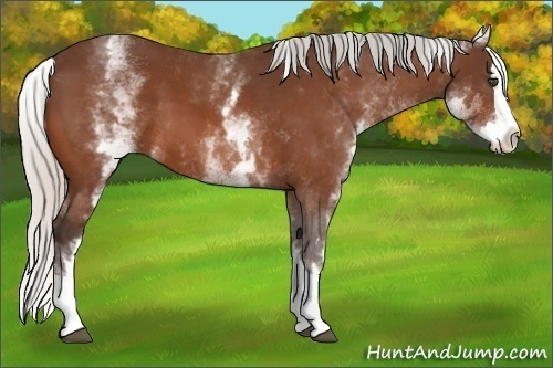Horse Color:White Spotted Silver Bay Splash