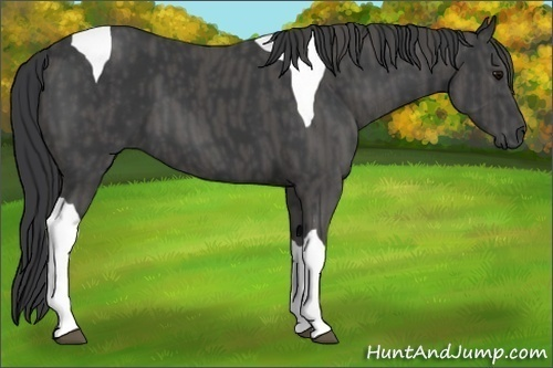 Horse Color:Black Tobiano  Brindle