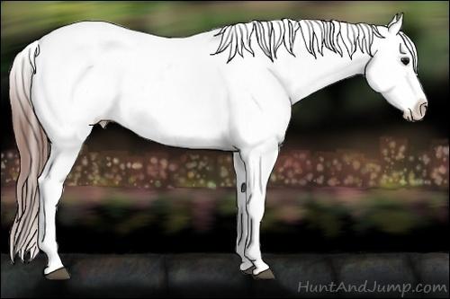 Horse Color:White Spotted Black Splash Tobiano Frame Appaloosa