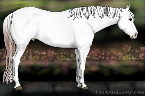 Horse Color:White Spotted Black Splash Tobiano Frame Appaloosa