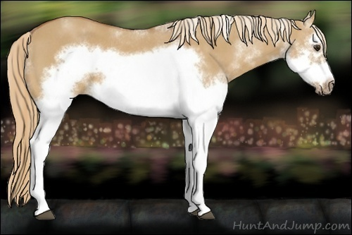 Horse Color:Red Dun Sabino Splash Frame Rabicano