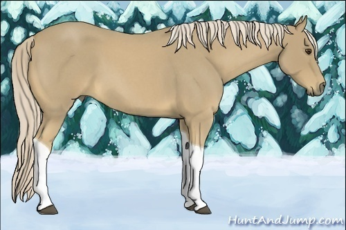 Horse Color:Palomino Roan Tobiano